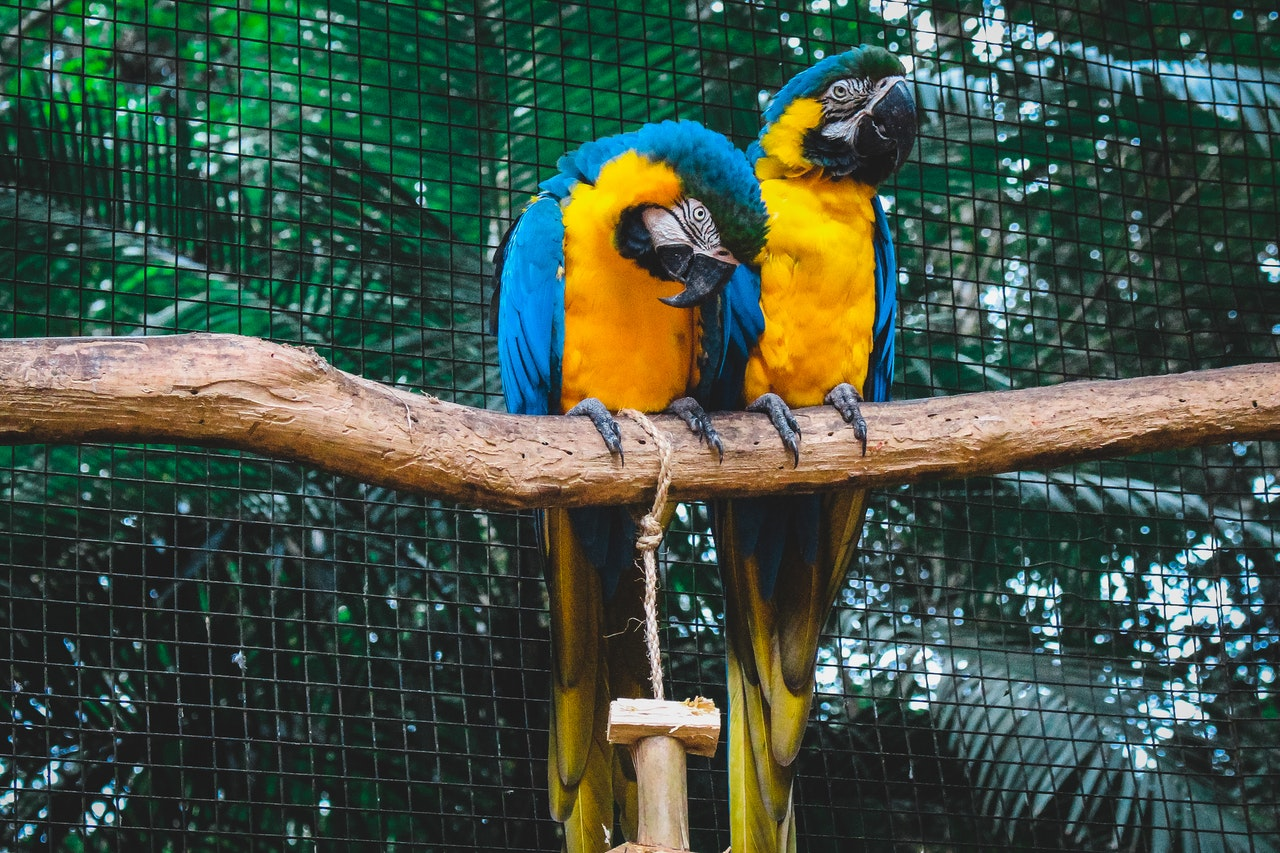 Guide To Keep Your Birds Healthy And Safe In Summer